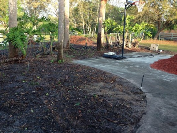 Neglected Orlando homeowner landscape
