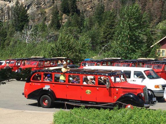 Red Bus tours at Glacier