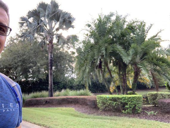 Orlando palm trees