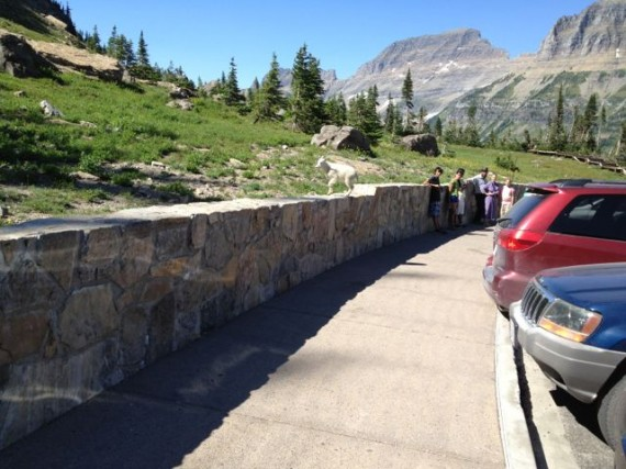 Glacier National Park - The Crown of the Continent