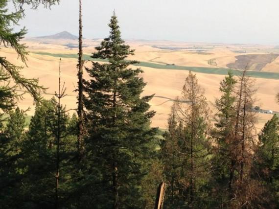 Steptoe Butte from Kamiak Butte's north side
