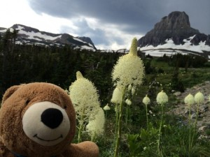 Teddy Bear in Bear Grass near Logan Pass
