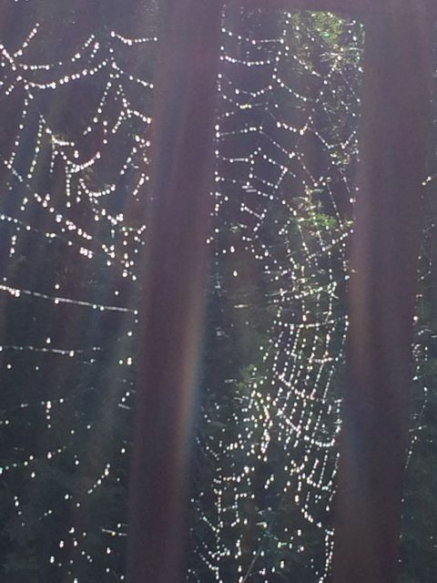 Glistening spider web at North Carolina cabin
