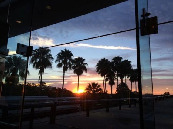 Palm Tree Sunrise at Orlando airport