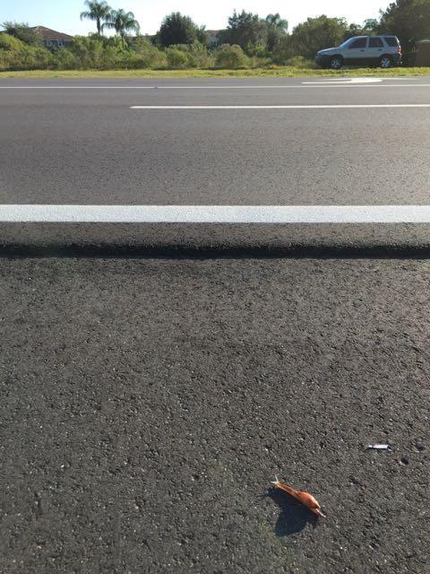 snail crossing road