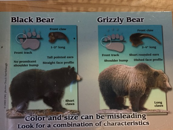 Chart on Black bear versus Grizzly bear