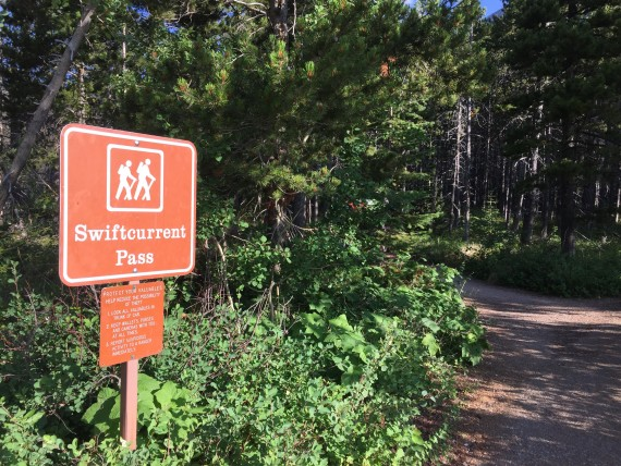 Swiftcurrent Pass Trail head