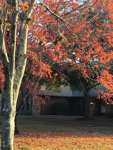 Orlando Fall foliage