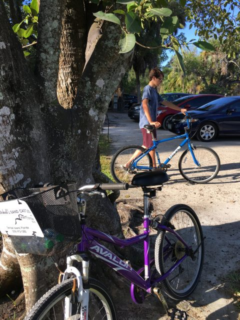 Island Cow by bike