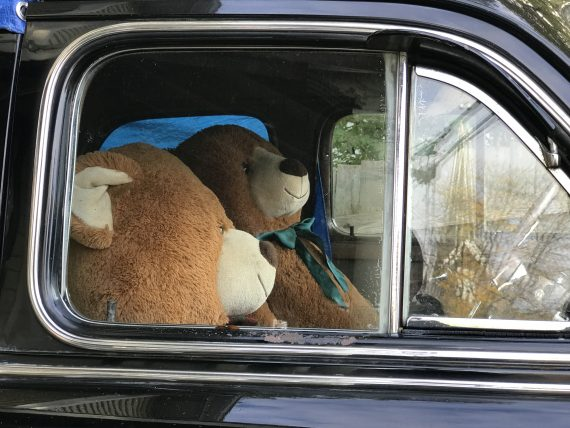 Teddy Bears in a car
