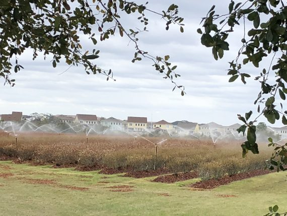 Orlando Blueberry field