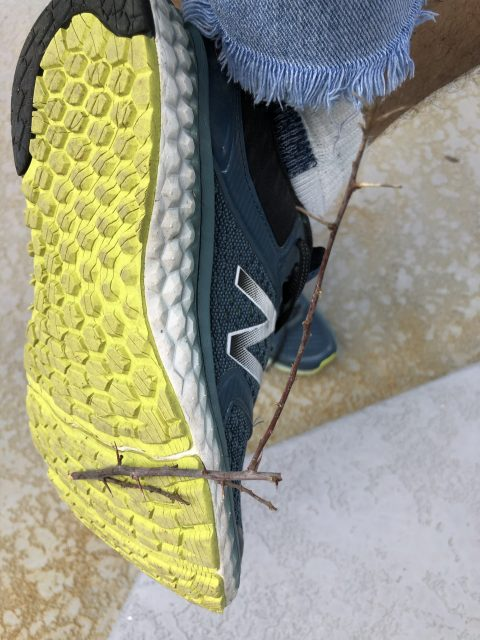 Thorny branch stuck in shoe