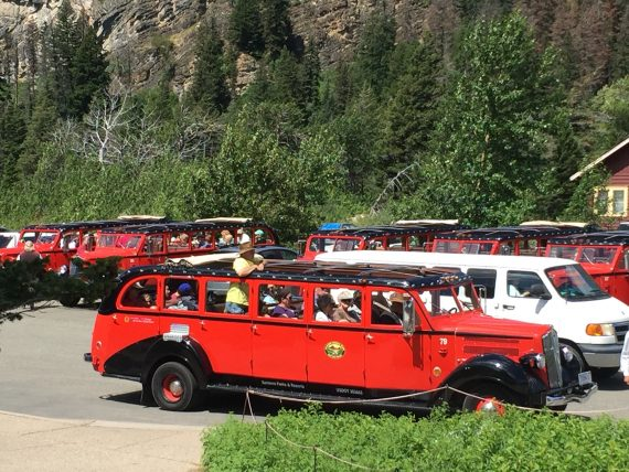 Red Bus tours at Glacier
