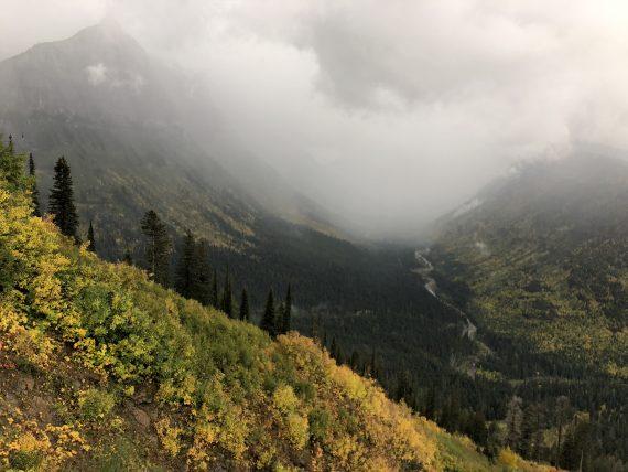 Rainy at Logan Pass