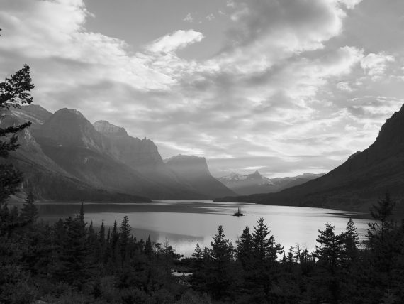 Wild Goose Island black and white