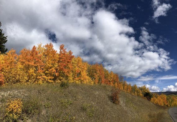 Fall foliage at Glacier