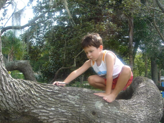 Very young boy climbing a tree