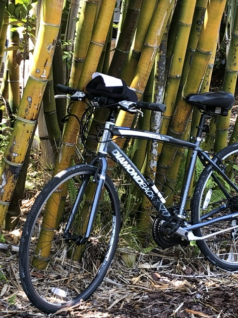 bicycle parked next to bamboo trees